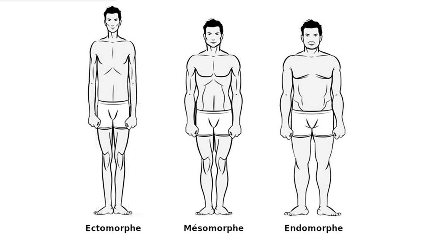 endomorphe